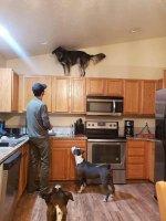 Dog on cabinet.jpg