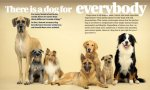 Why-Dogs-Are-Better-Than-Cats-04.jpg
