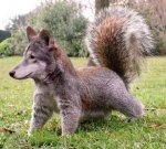at-some-point-a-dog-and-squirrel-have-done-something-very-wrong--1.jpg