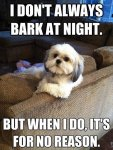 Top-10-best-funny-dog-pictures-with-quote-2013_7.jpg