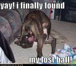 Top-10-best-funny-dog-pictures-with-quote-2013_1.jpg
