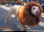 Funny-Dogs-Funny-Dog-Picture-90-FunnyPica.com_.jpg