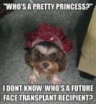 funny-picture-whos-a-pretty-princess-funny-dog.jpg