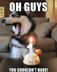 funny-husky-dog-birthday-cake.jpg