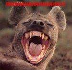 Laughing Hyena.jpg