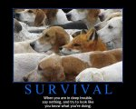 Survival (When in trouble, say nothing, ... Fox & Dogs).jpg